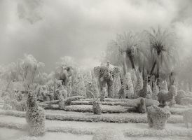 Elephant infrared... by MichiLauke