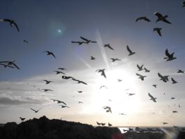 Flock of Seagulls by frayzoid