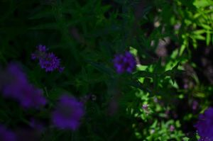 Flowers and Shadow by MichaelGBrown