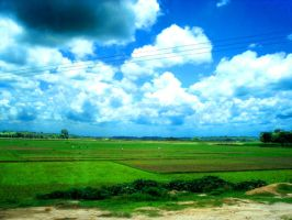 Village Field in Bangladesh by shafin