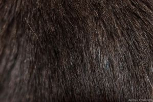 Cat hairs by AndreaMetallurgico