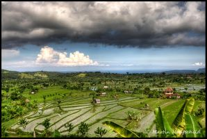 Ricefields by Haufschild