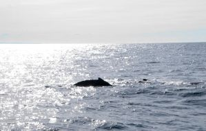 Whale Back and Sun Light by Miss-Tbones