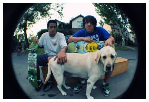 Skate dogs by aleito