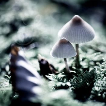 little mushrooms by prismes