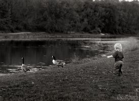 indy and the geese by scottchurch