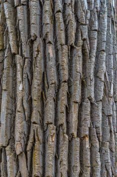 Bark Texture Stock by redwolf518stock