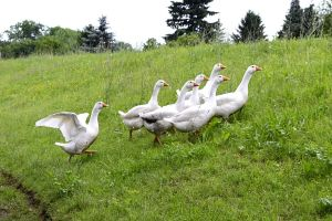 Running Geese by Roky320