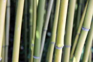 bamboo_1 by ultraviolet1981