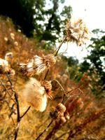 Once Was A Thistle by Ionday