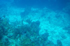 Barrier Reef 06 by FairieGoodMother