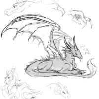 Dragon Sketches 03 by fabman132