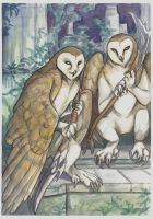 Barn Owls by saeto15