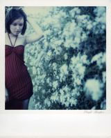 SX-70 polaroid 91 of 100 by lloydhughes