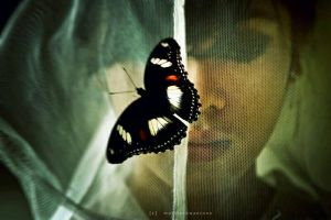 wings of a butterfly by illdispose