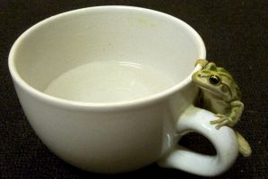 frog stock by hatestock