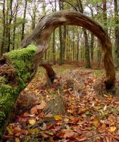 aching arch by Pippa-pppx