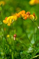 Beauty is Everywhere by eyedesign