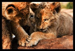 Cubs Playing by TonallyTormented