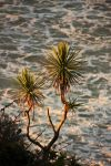 Cabbage Trees... by Mikelyjohnsono