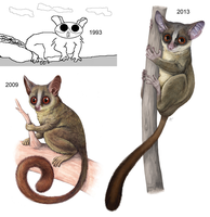 The Galago Throughout the Years by akelataka