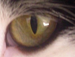 Cat eye by BonnieMeilicke86