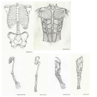 Body Structures by icdrag2002