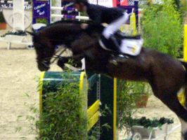 Horse Jumping 13 by exatitude
