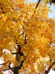 Leaves of December by Timothy22236
