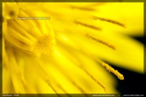 Another Yellow Flower by ValerioBulla