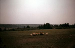 Field by TransitoryAvailable
