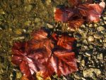 Leaves at the Water's Edge by Mistshadow2k4