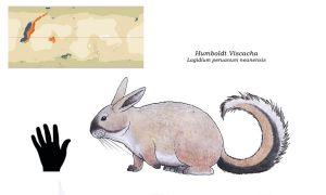 Nea  - Humboldt Viscacha by Dontknowwhattodraw94