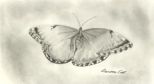 Butterfly by vitamvivere