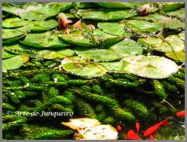 Frog's and 'fings by Arte-de-Junqueiro