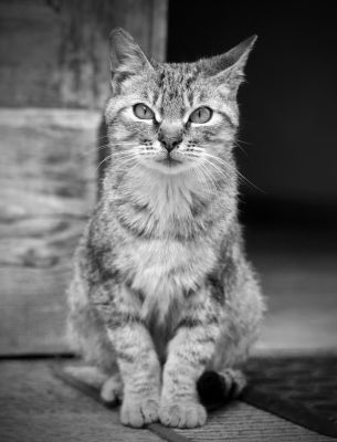 BW Cat by garion87