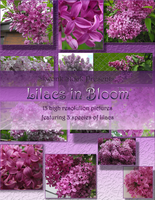 Lilacs in Bloom Pack by skwonk-stock