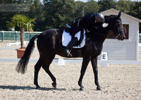 National Dressage and Jumping_4 by CalyHoney