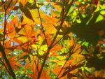 Fall Leaves by rooey1