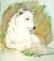 .: The White Wolf :. by Crazywolfs