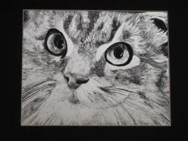 Missy Scratch Board by evangeline40003
