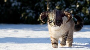 Cat in snow, skyrim (1600x900) by Saicek
