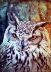 The wise Owl by Alejandra-perez