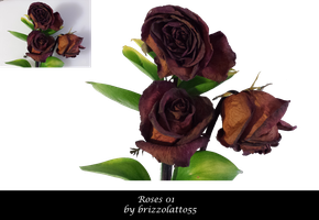 Roses 01 by Brizzolatto55