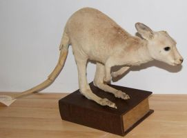 Vintage Blonde Wallaby by Phoenix-Cry