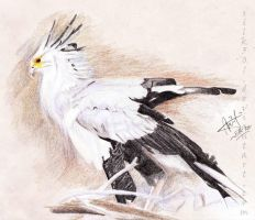 EAP May : secretarybird by silk501