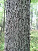 Tree Bark 5 by Salamander-Stock