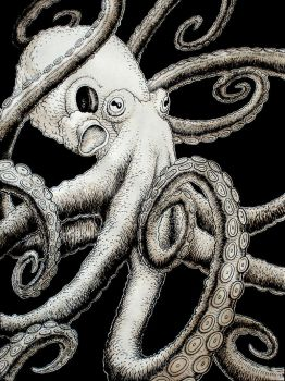 Octopus by Rode-Egel