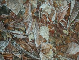 Frosty leaves by Gin-ny