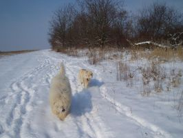 Dogs in the Snow by kate44